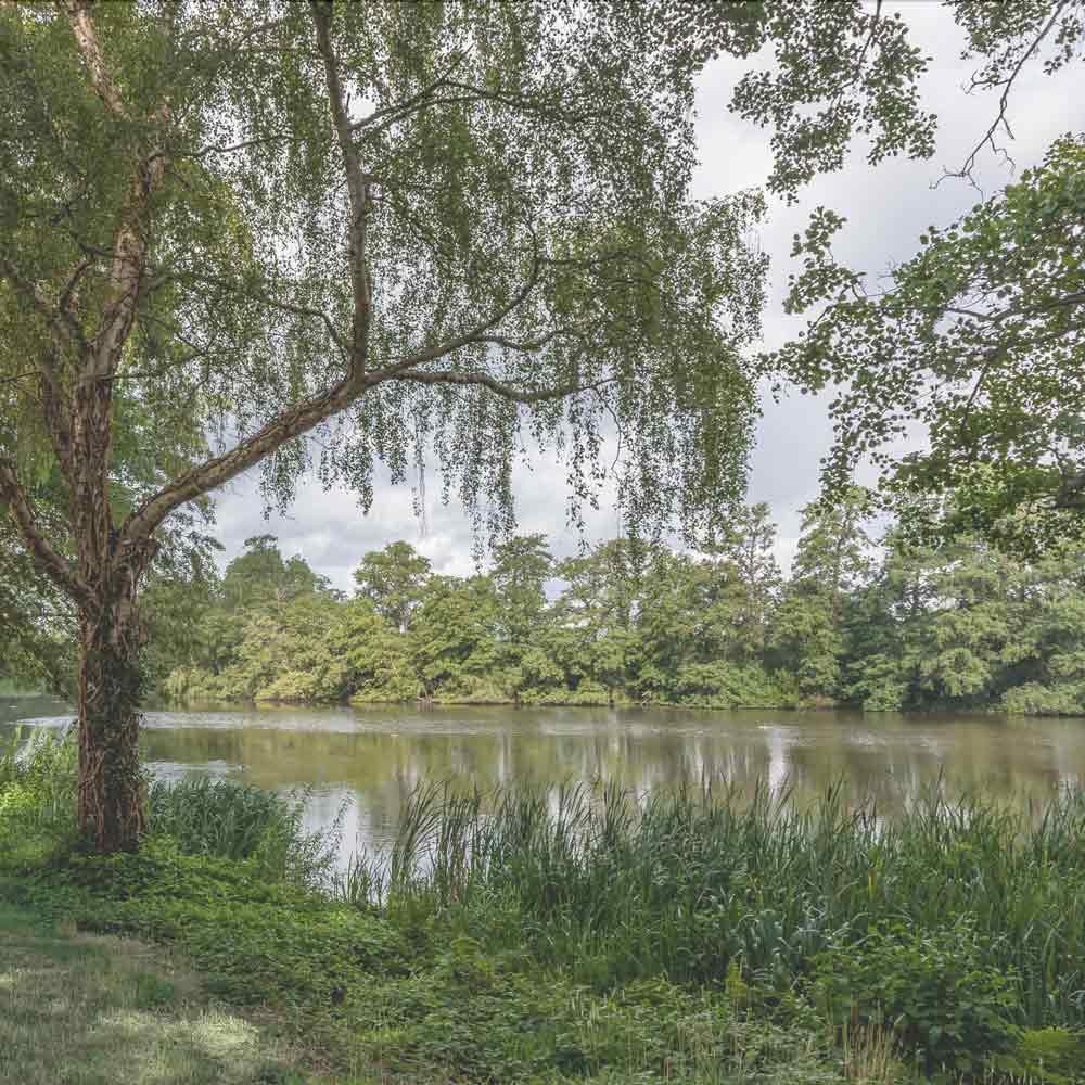 The Surrey Riviera