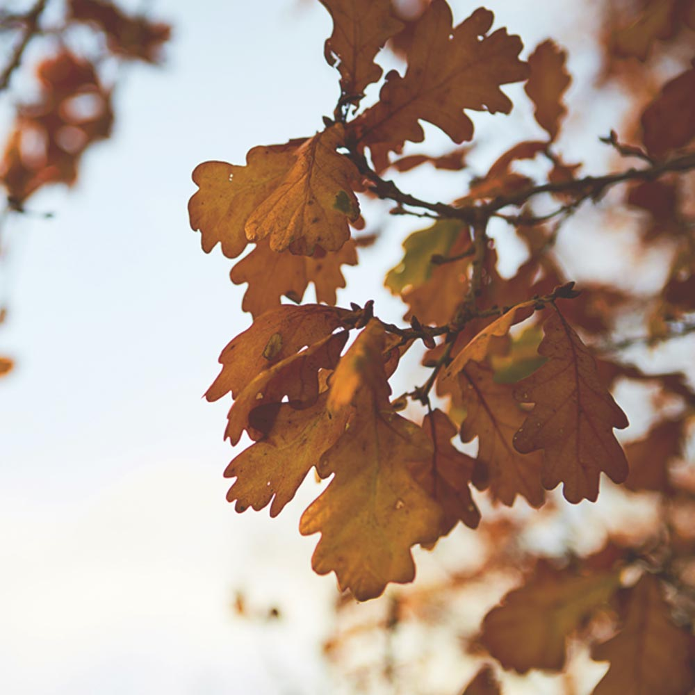 October staycations in Surrey